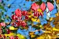 Fall foliage (30730564831).jpg