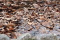Fallen leaves into water.jpg