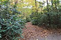 FallingWaters fall colors - panoramio (23).jpg