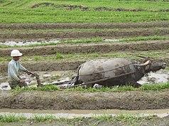 Pertanian Wikipedia Bahasa Indonesia Ensiklopedia Bebas