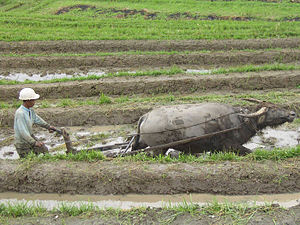 Farming on Indonesia.