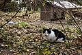 Feral cat at Parque del Buen Retiro, Madrid.jpg