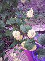 Feuilles et fleures jaunes.jpg