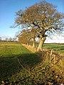 Field boundary near Netherwitton - geograph.org.uk - 622104.jpg