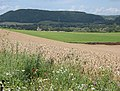 Field of wheat near Goodrich. - geograph.org.uk - 507131.jpg