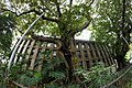 Fig Tree High Street 001aa.jpg