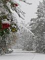 First snow (11088342593).jpg