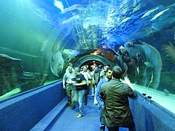 Fish tunnel at Two Oceans Aquarium CT jeh.jpg