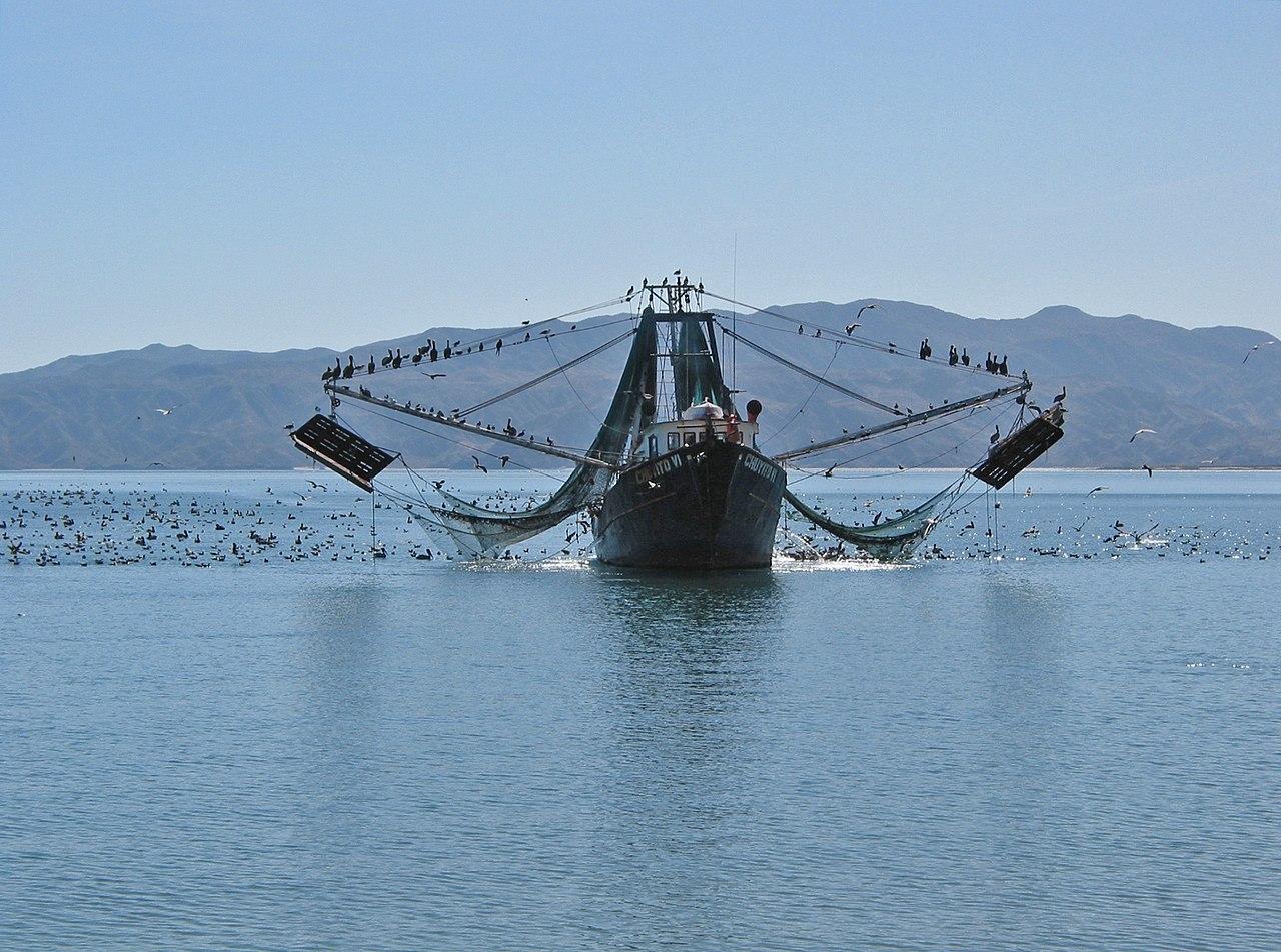 Baja Trawler