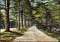 Five Mile Drive in Dinsmoor Woods, Keene, NH (2845240273).jpg