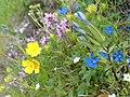Fleurs. Juillet 2007 - panoramio - anagh.jpg