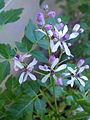 Fleurs 20140607 190044 1.jpg