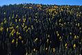 Flickr - ggallice - Aspen colors.jpg