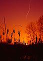 Flickr - law keven - A Winters tale....jpg