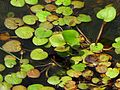 Floating Heart - Flickr - treegrow.jpg