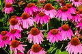 Flower002.jpg