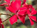 Flowers (14911215386).jpg