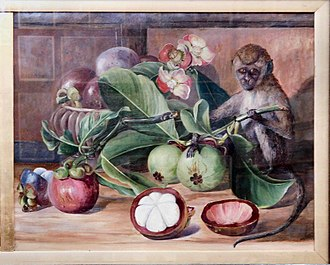 Mangosteen - Flowers and fruit of the mangosteen, and Singapore monkey, by Marianne North, before 1890