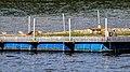 Flussseeschwalbe (20) (34218090363).jpg