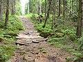 Footbridge in a forest - panoramio.jpg