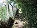 Footpath beside railway line - geograph.org.uk - 1381302.jpg