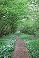 Footpath in The Plantation - geograph.org.uk - 425013.jpg