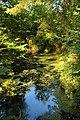 Forêt de Stambruges 13.jpg