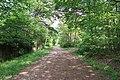 Forêt domaniale de Bois-d'Arcy 16.jpg