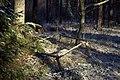 Forest - panoramio (62).jpg
