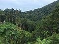 Forest in Ko Pha Ngan 3.jpg