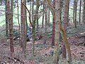 Forestry work - geograph.org.uk - 406432.jpg