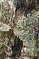 Forgotten Lichen (3163238073).jpg