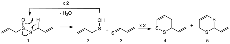 File:Formation of vinyldithiins from allicin.png