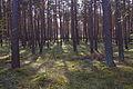 Forst Rundshorn IMG 1736.jpg