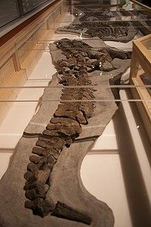 Fossil vertebrae.jpg
