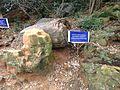 Fossilwoodparkthiruvakarai-7.JPG