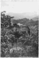 Fotg cocoa d019 hill cacao estate in ceylon.png