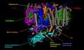 Fotosistema secondo PSII.png