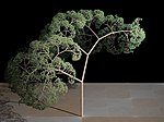 Fractal tree (Plate b -2). jpg