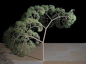 Fractal tree (Plate b - 2).jpg