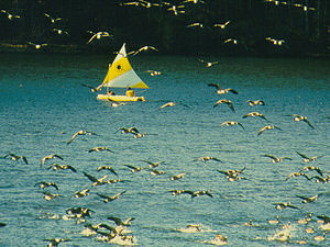 French Creek State Park - Sailing on Hopewell Lake