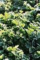 Frost pyrénées 01.jpg