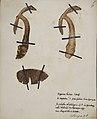 Fungi agaricus seriesI 011.jpg