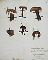 Fungi agaricus seriesI 047.jpg