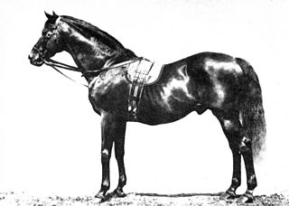 Galopin British-bred Thoroughbred racehorse