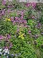 Garden's 14.jpg