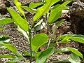 Garden lizard camouflage.jpg