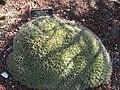 Gardenology.org-IMG 0437 hunt07mar.jpg