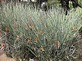 Gardenology.org-IMG 5079 hunt0904.jpg