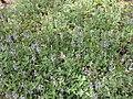 Gardenology.org-IMG 5144 hunt0904.jpg